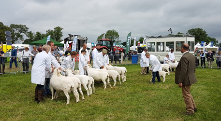 Hanbury Countryside Show 2017 - sheep judging - Sheldon Bosley Knight sponsorship