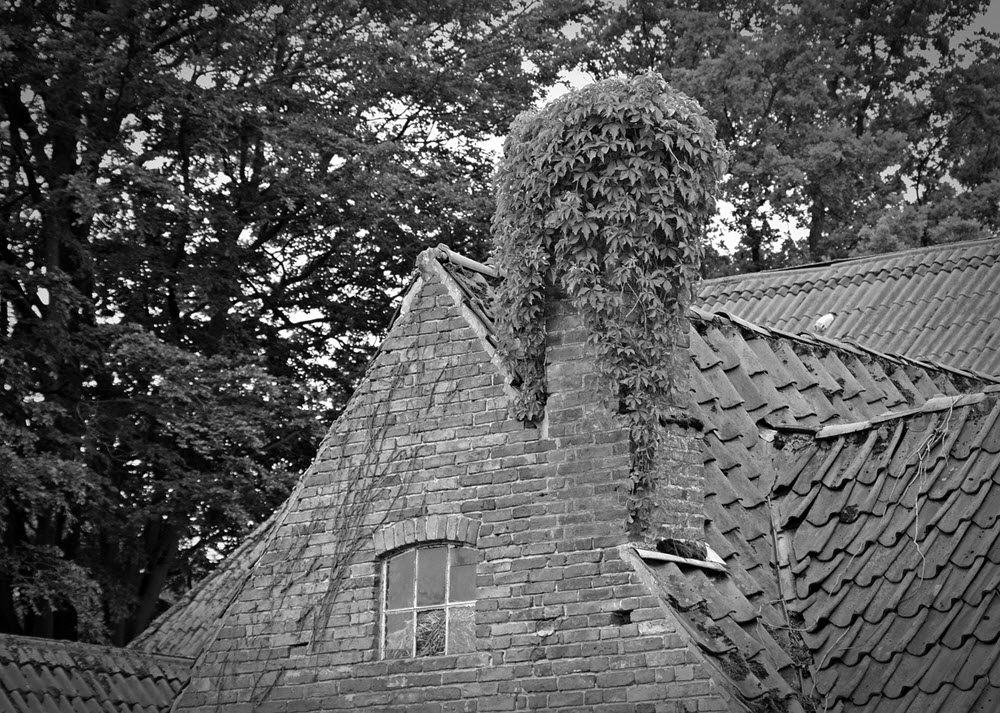 ivy on chimney