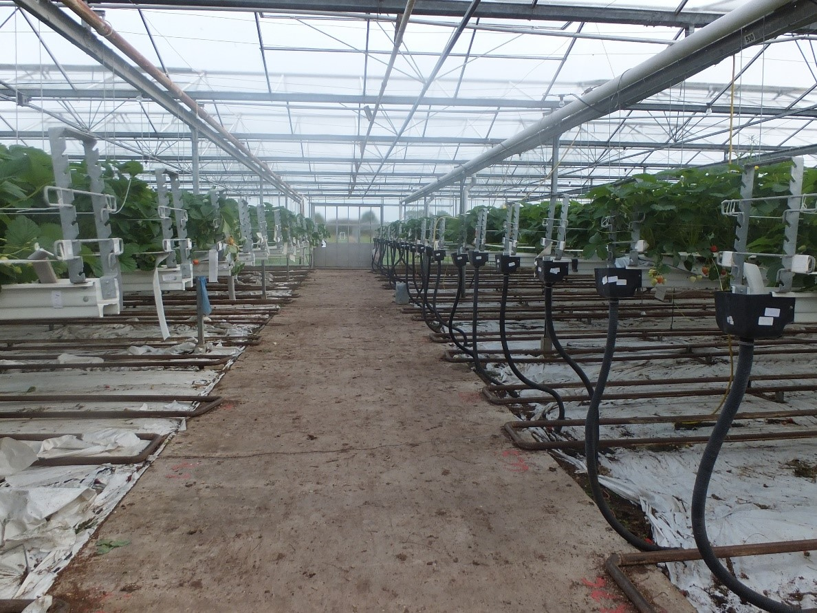 commercial greenhouse - horticultural surveyor - Sheldon Bosley Knight