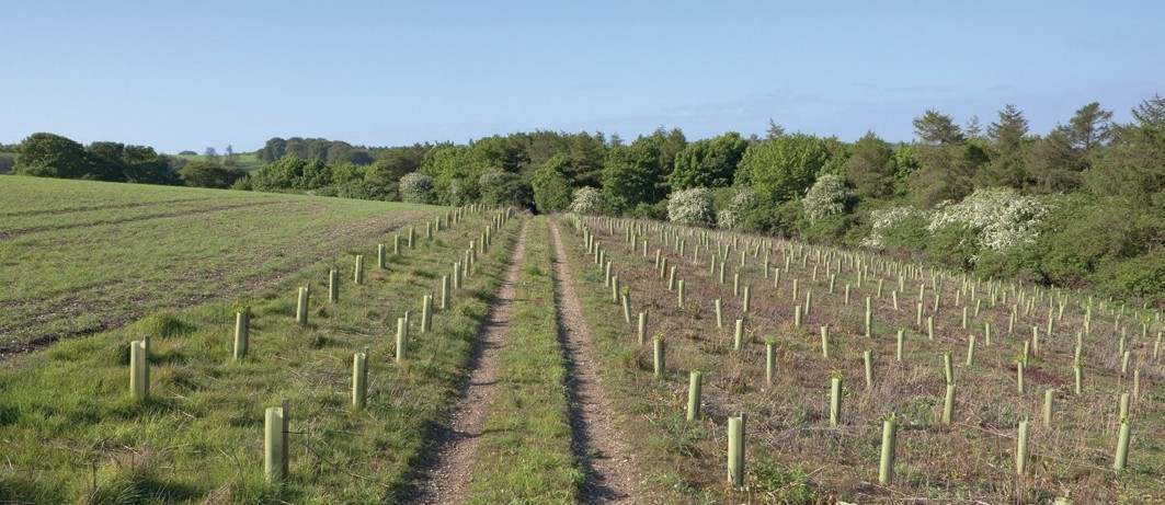 Countryside Stewardship - field planted with saplings